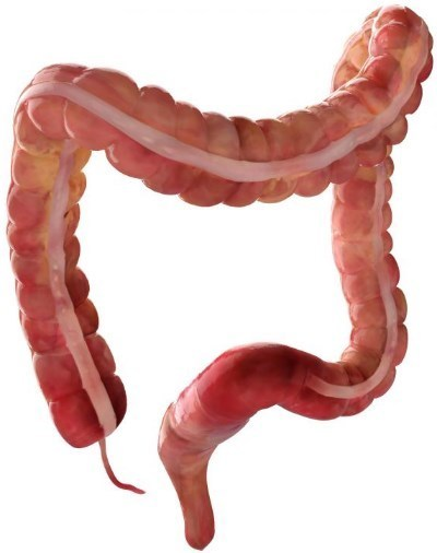Товстий кишечник: будова і функції органу
