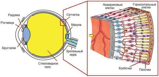Абіотрофія сітківки (тапеторетинальна): що це таке, лікування