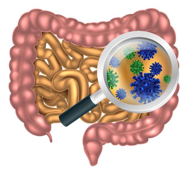 Як кишечник впливає на імунітет людини?