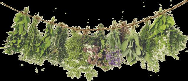 Трави для лікування шлунку і їх використання при різних хворобах