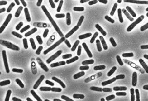 Профілактика від паразитів в організмі людини: таблетки і харчування