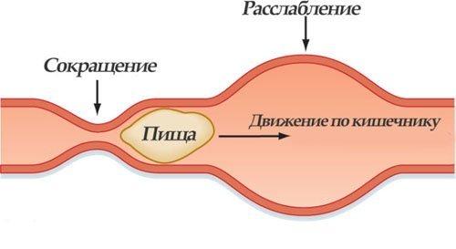 Моторика кишечника: варіанти норми і порушення, лікування