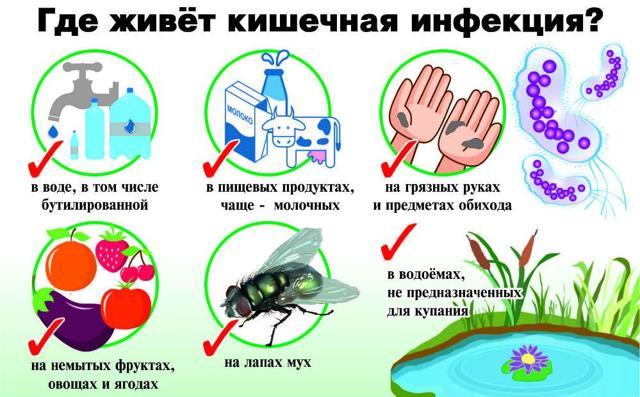 Бактерії групи кишкової палички: види і особливості збудника