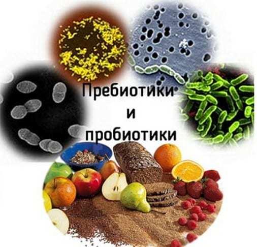 Прибуток і пребіотики для кишечника: що це таке, їх відмінності і список препаратів