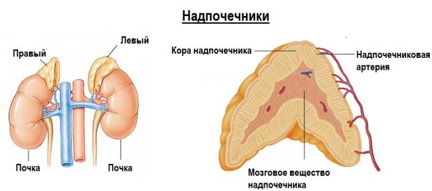 Казеозна пневмонія - що це таке, причини і лікування