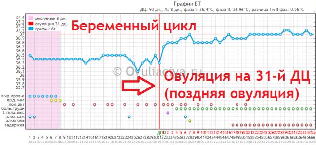 Ознаки початку овуляції: коли настає овуляція при 30 денному циклі