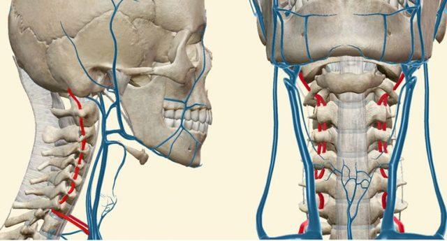 Симптоми остеохондрозу, ознаки ураження шийного, грудного і поперекового відділу
