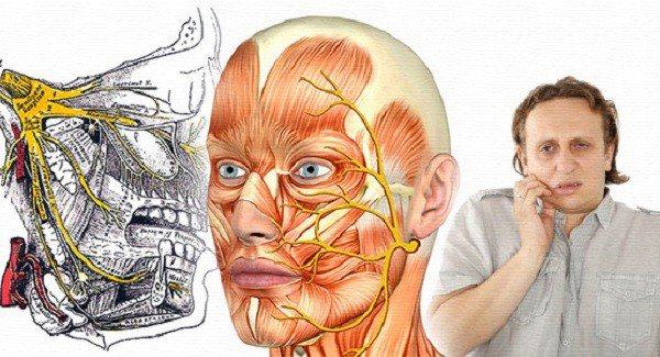 Анатомія системи трійчастого нерва і її патології