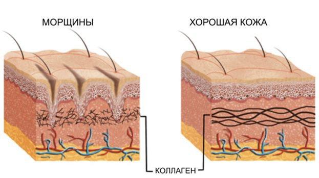 Що таке колаген його дію на шкіру