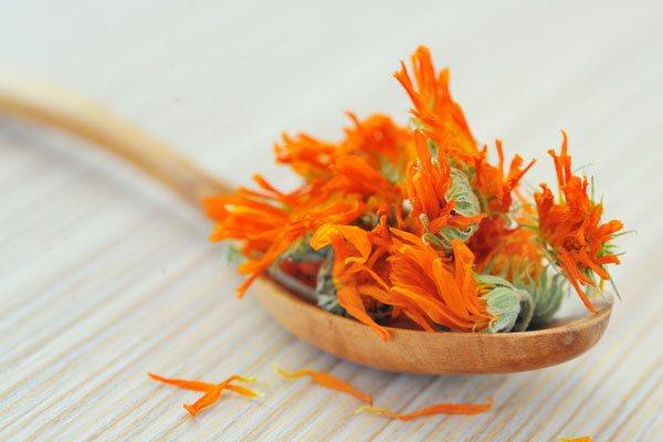 квітки календули