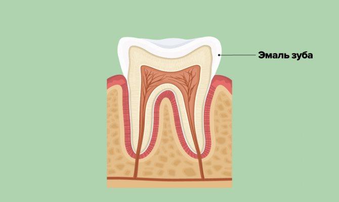 Емаль зуба в картинках