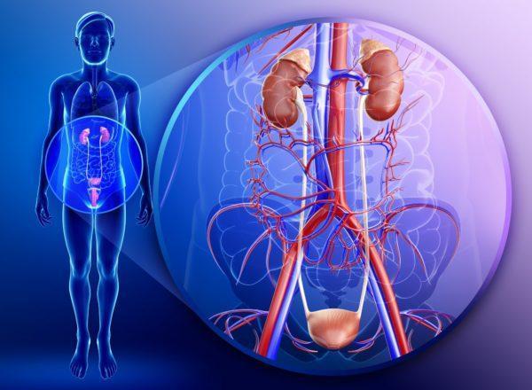 Тяжкість внизу живота: причини, варіанти норми і патології