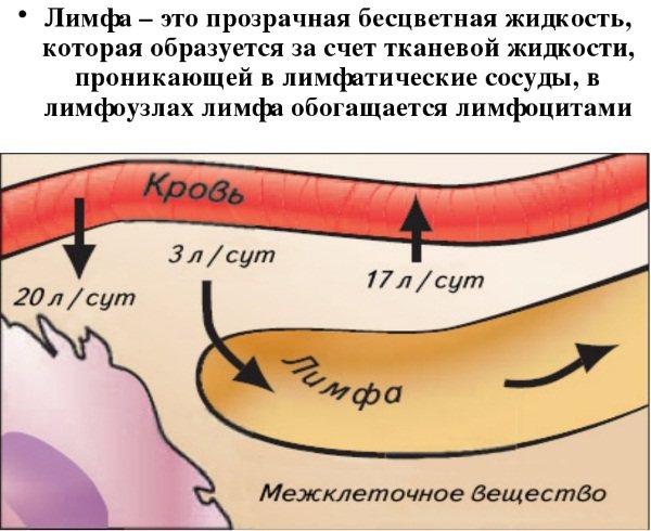 Лімфодренажний масаж обличчя і тіла. Техніка апаратного і ручного, як зробити в домашніх умовах