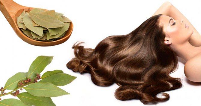 маска для волосся з лавровим листом