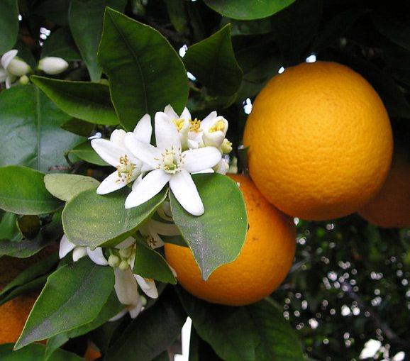 маски з апельсина