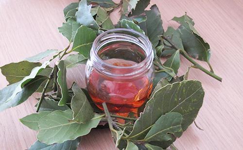 Настій з листя лаврового листа