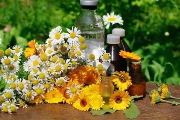 Ромашка і календула для лікування запалення ясен