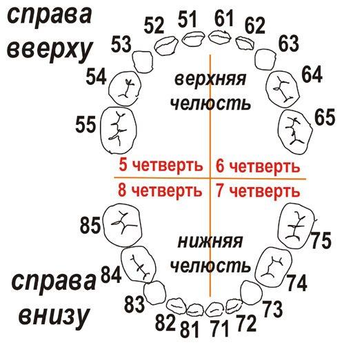 Схема нумерації зубів у дитини