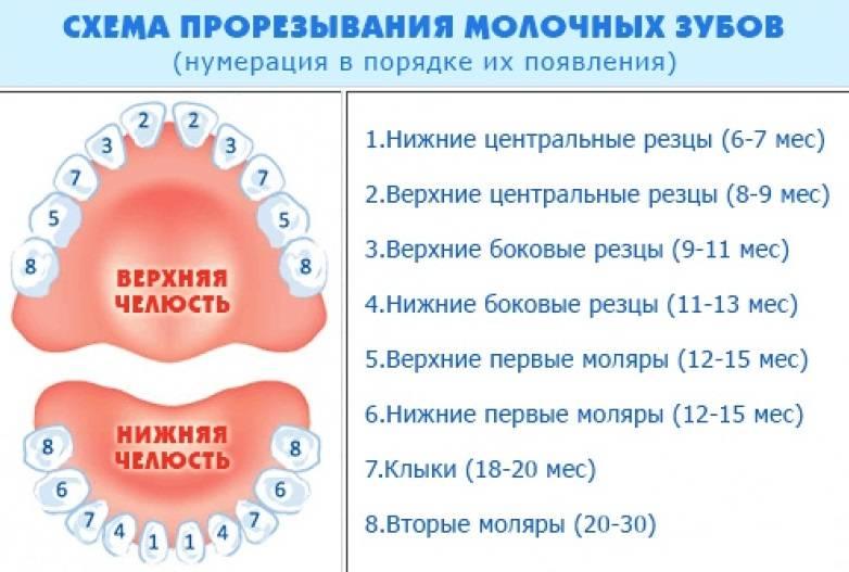 Схема прорізування зубів у дітей