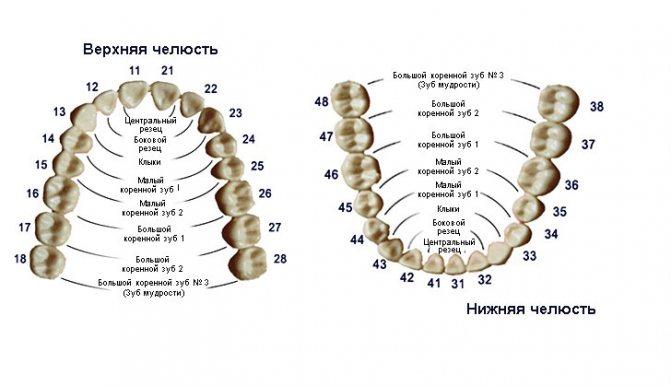 Схема розташування зубів