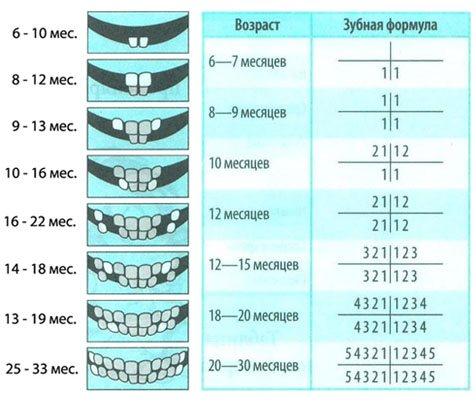 Таблиця росту зубів