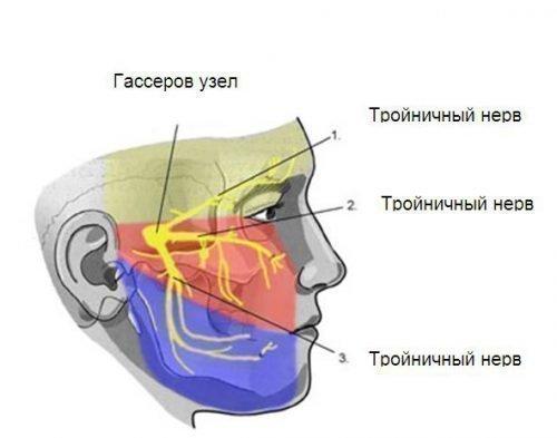 Трійчастий нерв викликає біль