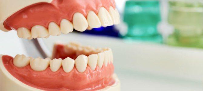 Зуби дорослої людини